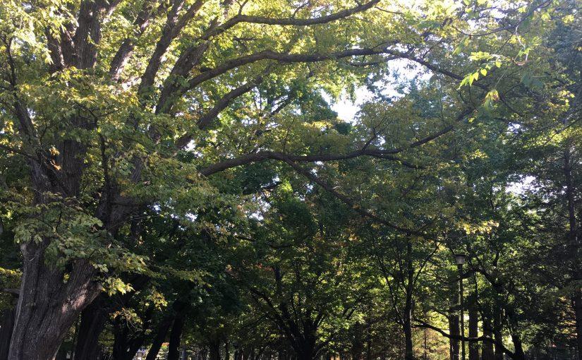 秋の円山公園を楽しむ