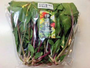 サラダほうれん草 紫 伊達野菜